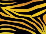 Tigris фотография