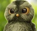 Зеленая Сова фотография